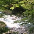 陽の照りに川は弾く